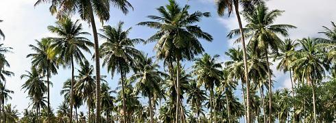 Palmen Meer Panorama Leinwand
