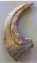 Deinonychus Raptor Dinosaur Claw Replica from Dinosaurs Rock http://www.amazon.com/dp/B008ETFMAW/ref=cm_sw_r_pi_dp_b-tMvb1DHXRSH