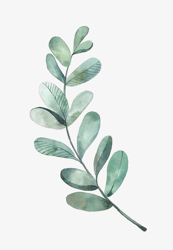 Watercolour leaf study. Artist information: 绿色叶片