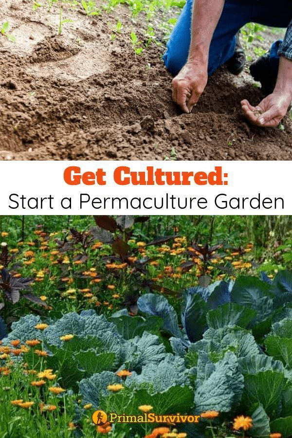 Get Cultured: Starting A Permaculture Garden. We're going to explore what permaculture is all about and examine its many strengths, but also pay attention to its weaknesses. #permaculture #survivalgarden #primalsurvivor