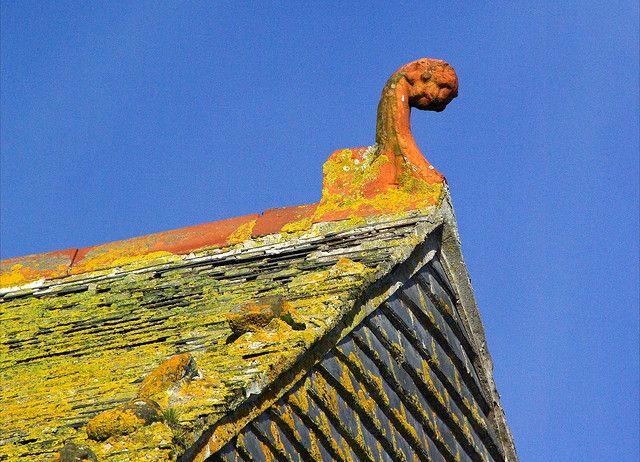 Lichen Covered Roof Lichen Lichen Moss Roof