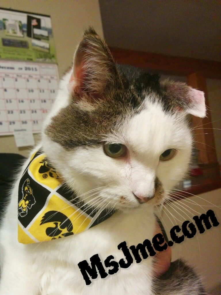 Cat Bandanaeasy to sew project. Over the collar so they
