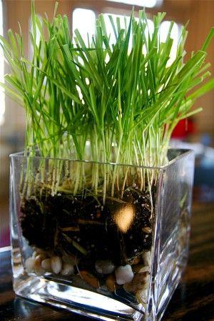 Common Grass Houseplants Varieties Of Indoor Grass Plants