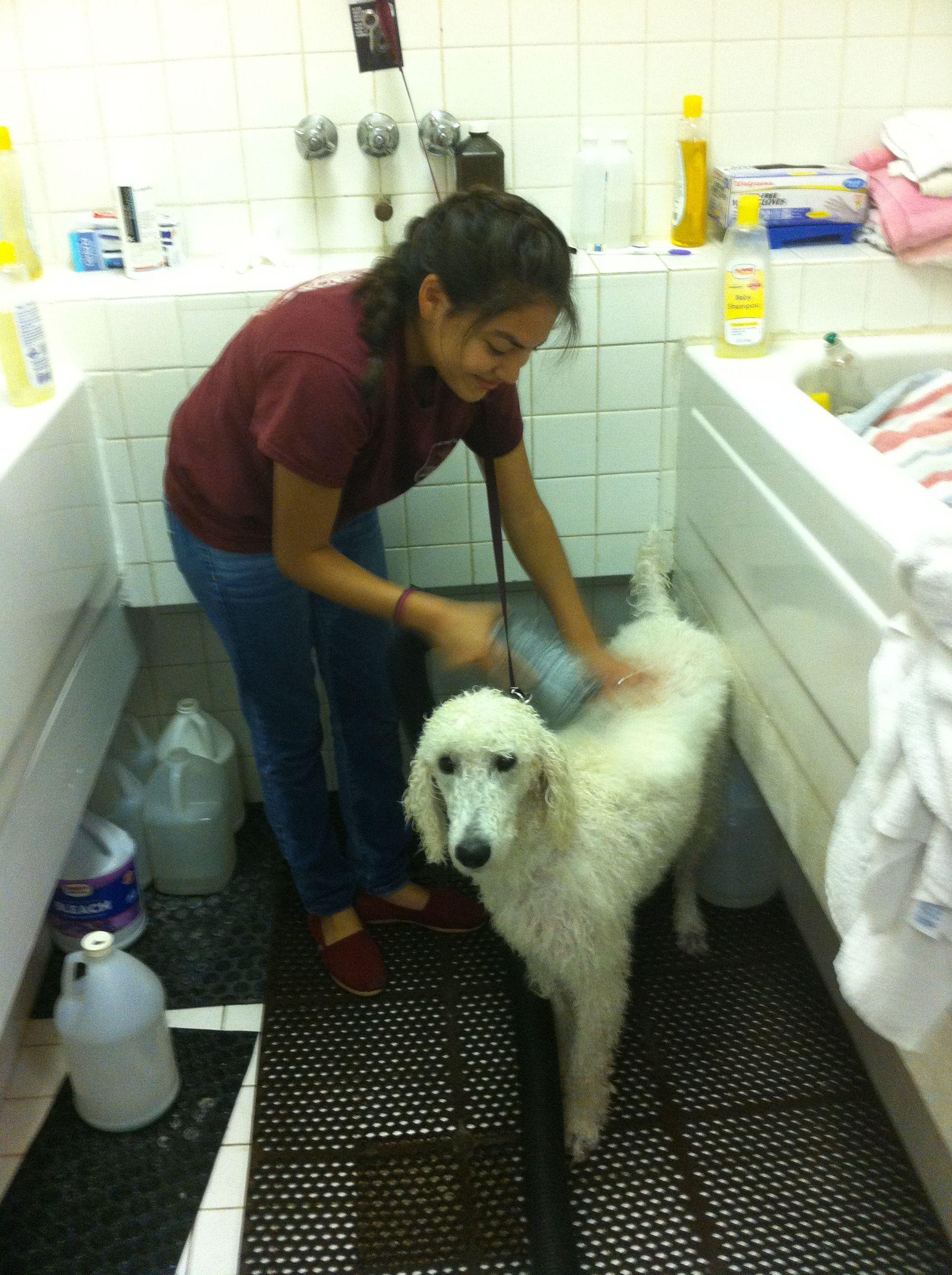 Annie's Saturday bath ) Pet grooming, Houston texas