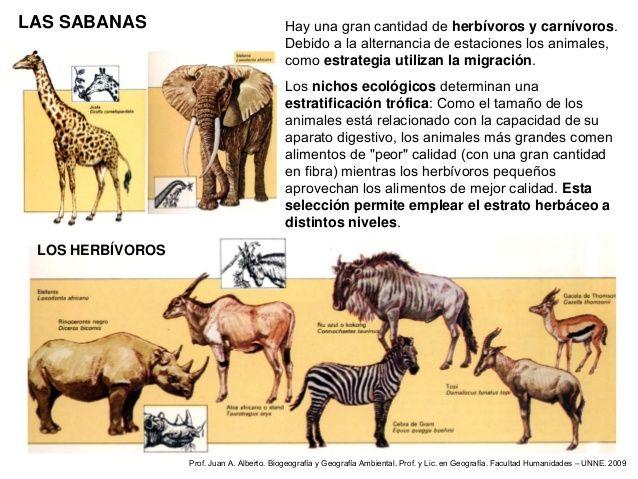 Animales Sabana Cerca Amb Google Sabanas Animales Nicho Ecologico