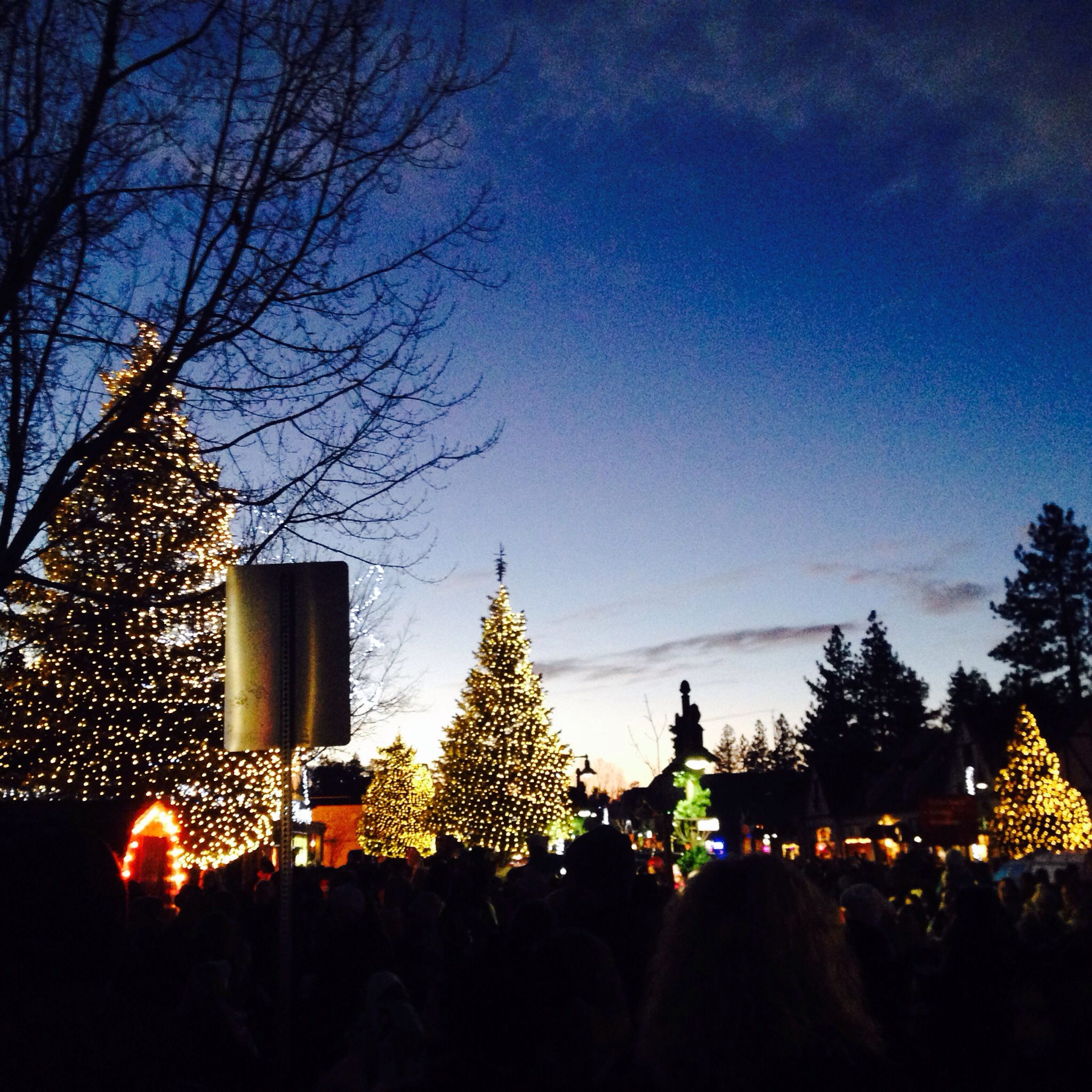 toluca lake christmas trees - HD2048×2048