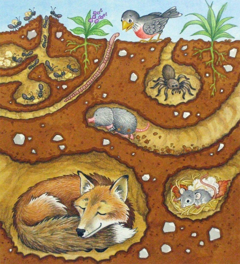 by Michelle DorenkampRepa Animals that hibernate, Kids
