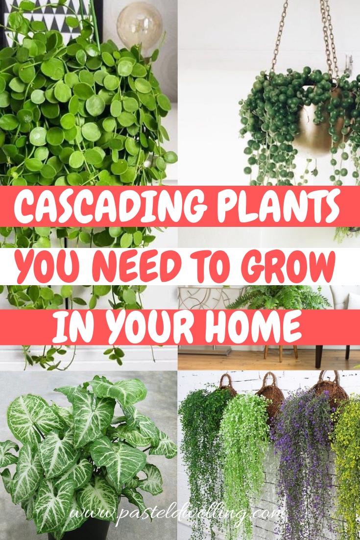 Cascading Plants You Need To Grow In Your Home How to grow cascading plants indoors hanging plants indoors how to take care of indoor plants how to take care of household...