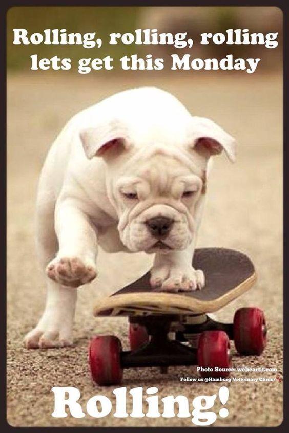 Bulldog On Skateboard Cute Animals