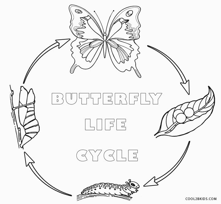 Butterfly Life Cycle Coloring Pages Miscellanious Pinterest