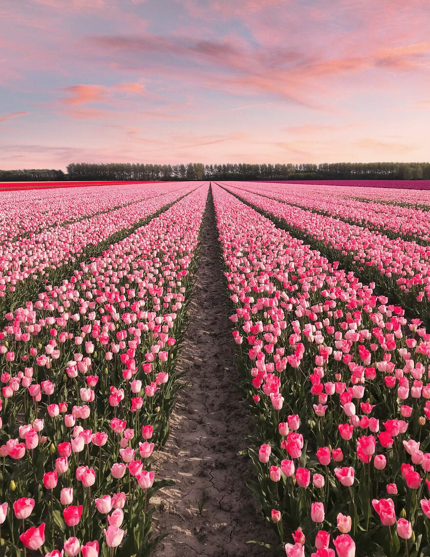 Holland Is Amazing We Captured The Unbelievable Transformation Of Seven Million Tulips Bloom Every Year Aro Flowers Photography Million Flowers Tulips Garden