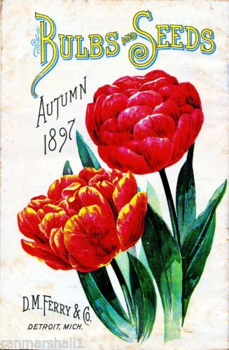 1897 Ferry Tulips Vintage Flowers Seed Packet Catalogue Advertisement Poster 2 | eBay