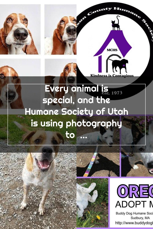Pin Na Doshci Humane Society