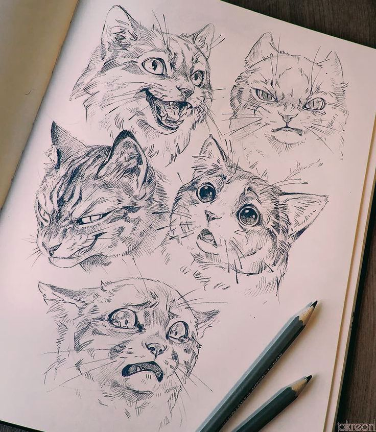 If there is one thing I enjoy drawing probably the most, is expressions on semi realistic animals. So here - have a bunch of cats making…
