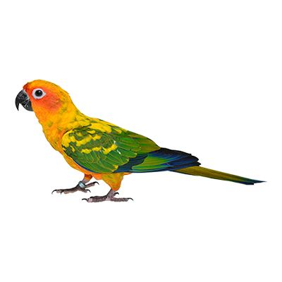Sun Conure care, owner reviews, health products  Top Sun Conure