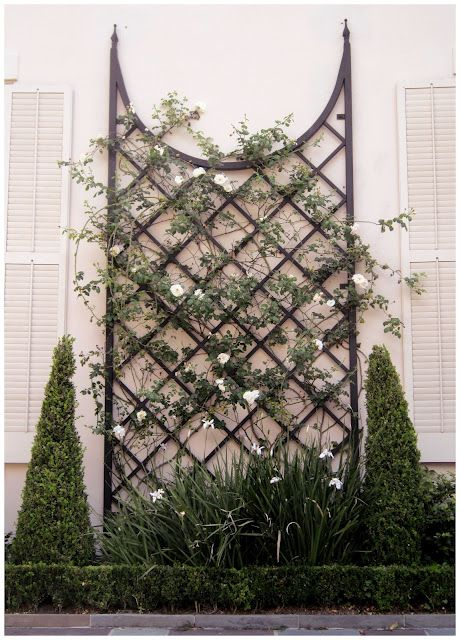Rose Vine On Wrought Iron Trellace With Images Garden Design