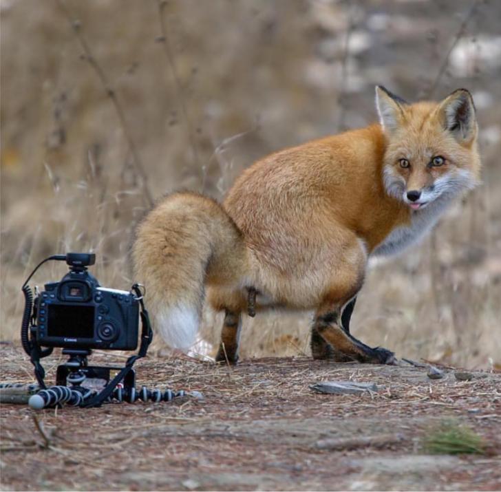 Картинки про лиса прикольные
