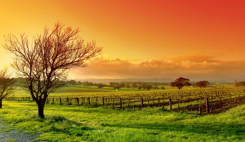 Making Mindfulness Work NICABM 2012 Landscape
