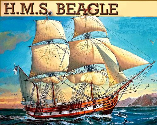 Darwin Sailed On The Hms Beagle On Its Route Darwin Discovered