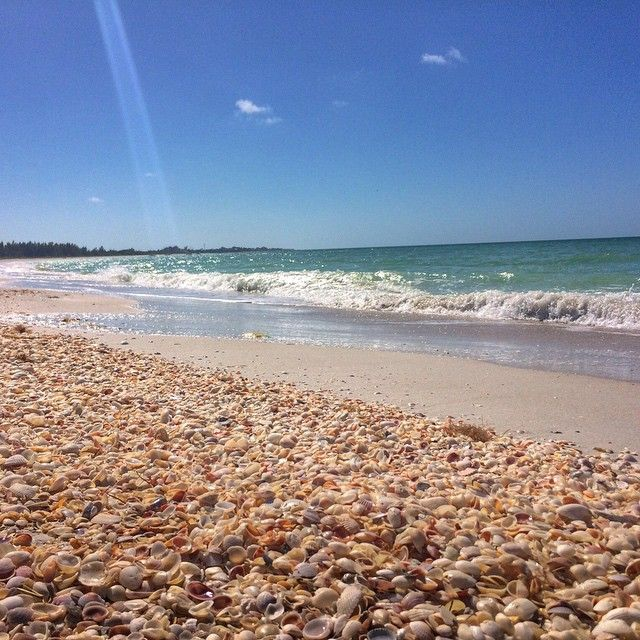 Places To Visit In Florida In April: Shelling Tips: Shelling Is Best During The Hour Before And