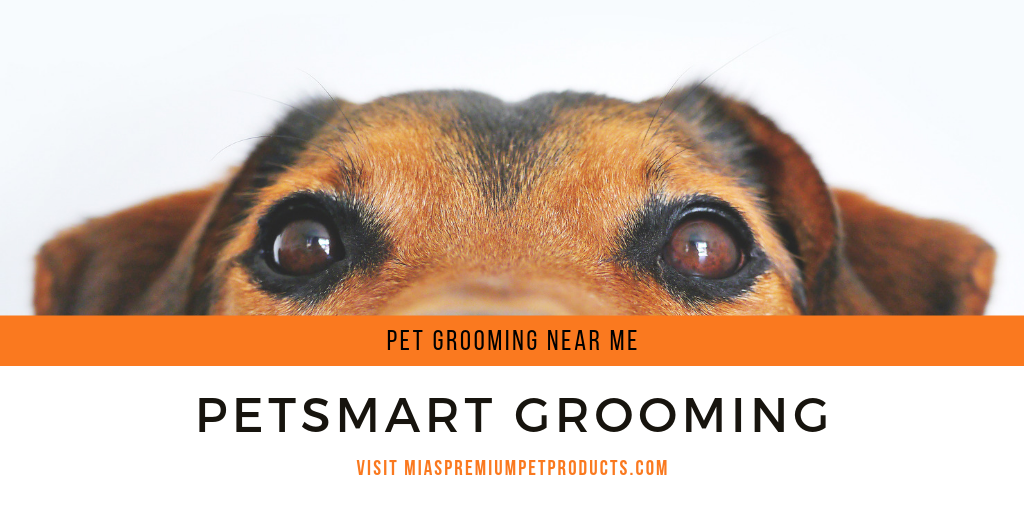 Best Pet Shop Services Provided In Town By Miaspremiumpetproducts Com Pet Travel Carrier Pets Dog Grooming Tools