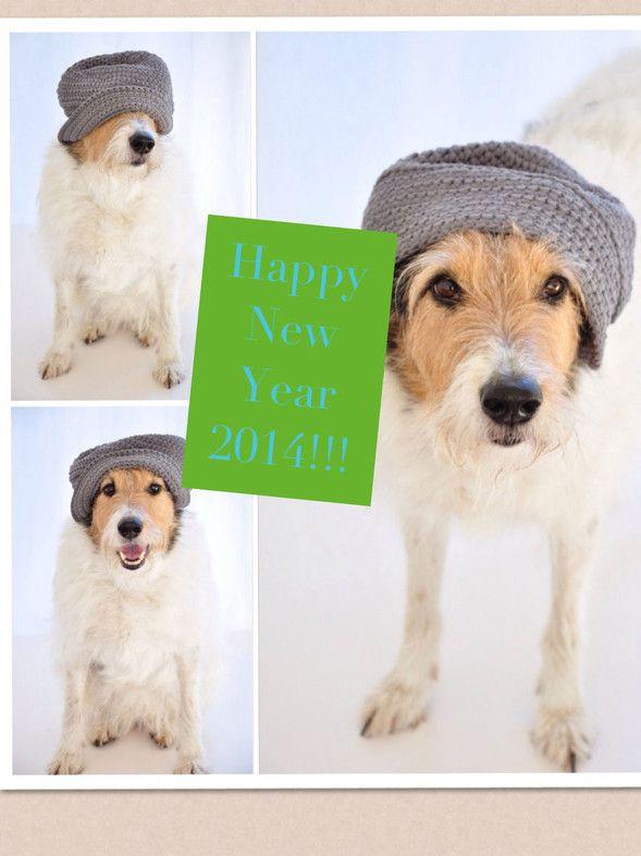 Ein frohes und gesundes neues Jahr 2014, wünscht der Glückshund.