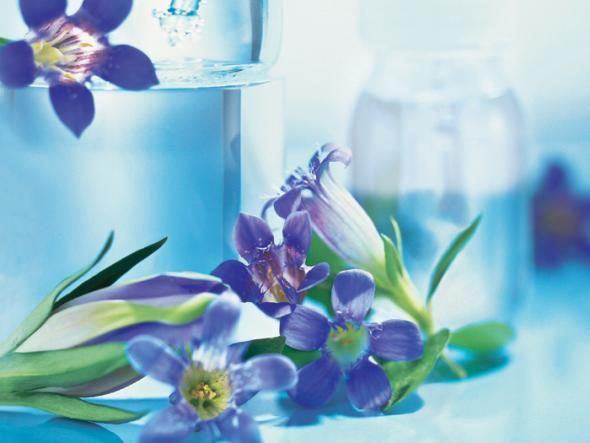 Ist ein Kraut gegen negative Gefühle gewachsen? Der Arzt Edward Bach glaubte daran. Seine Blütenessenzen sollen den inneren Stress lindern. Hier könnt ihr alles über die Alternativmedizin mit Bachblüten lesen!