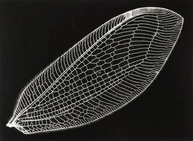 Insect wing. Light, strong, transparent, resilient, airborne. via LE CONTAINER