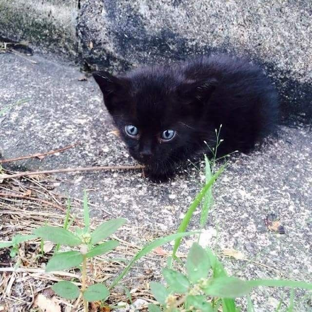 A Tiny 4 Week Old Kitten Was Found Alone By The Roadside Quietly Waiting For Help Right After They Got Him Some Food H Kitten Food Kitten Melanistic Animals