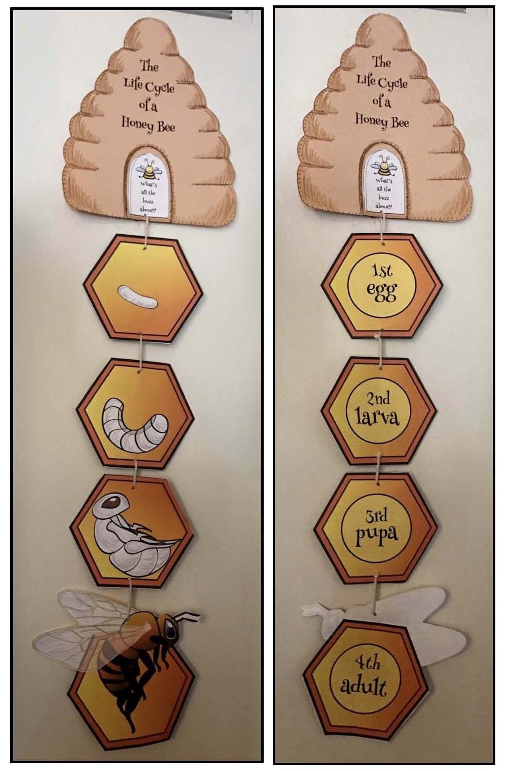 Hexagon Shaped Activities Beekeeping Bee Crafts Honey