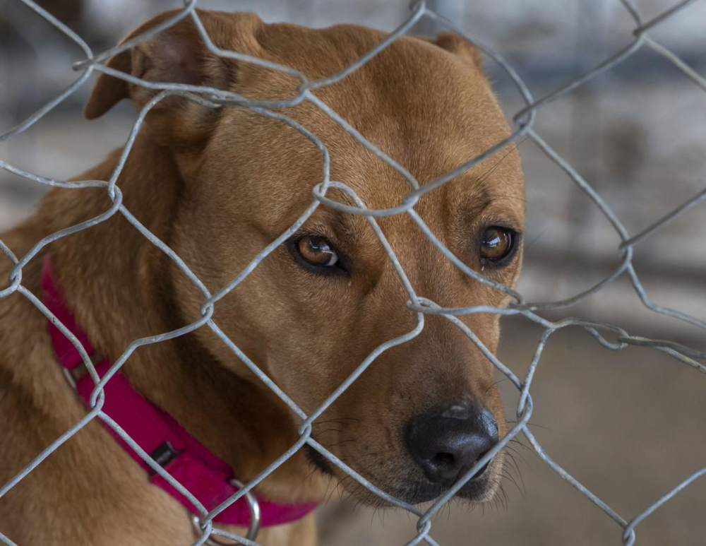 Bayou Animal Services New Shelter To Open Soon Local News The Daily News In 2020 Animals Shelter Animal Shelter
