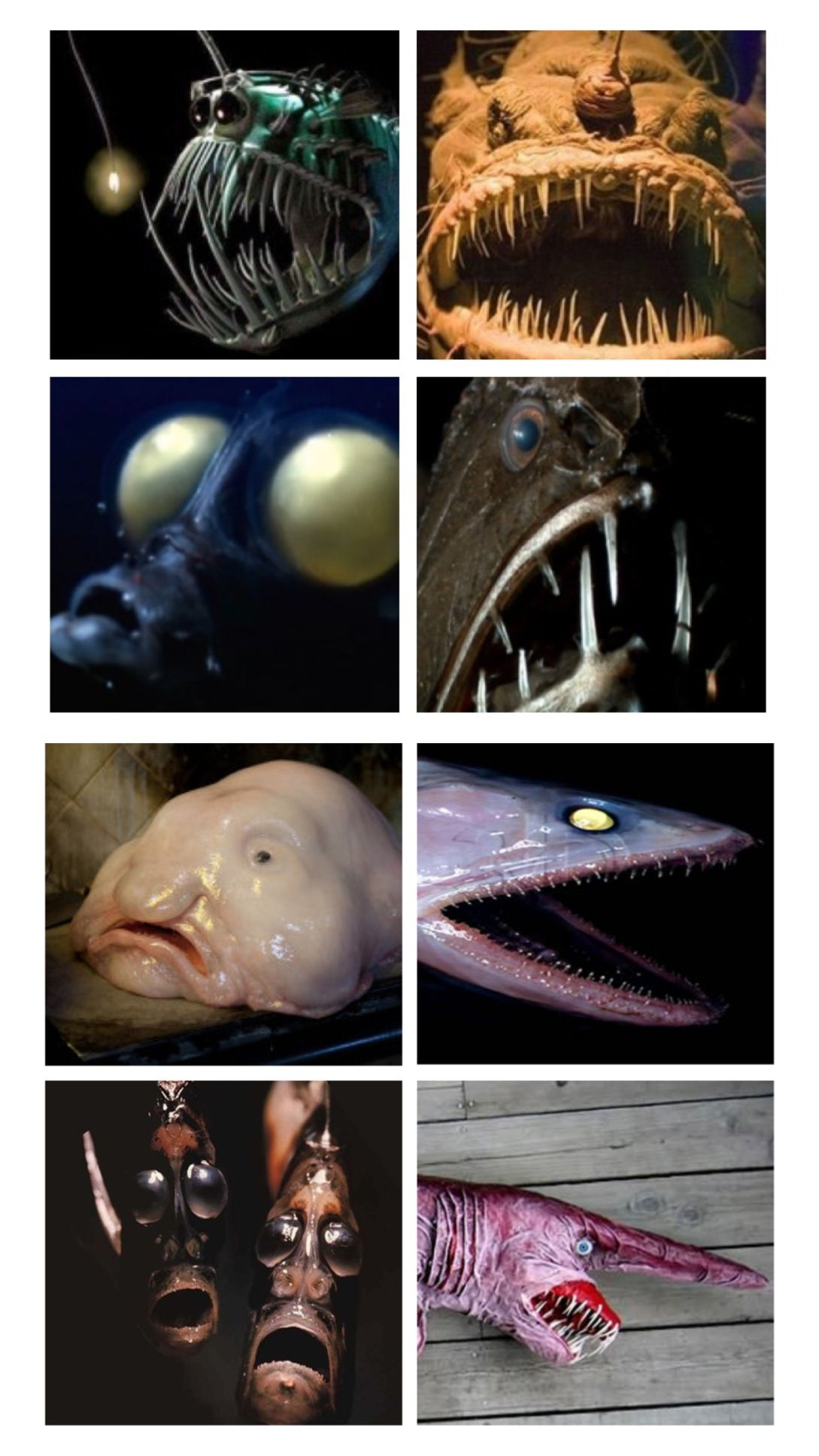 Ever wonder why the ugliest creatures on Earth are the ...
