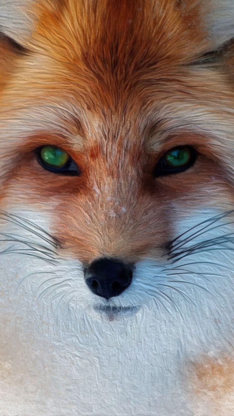 ☺iphone 7 wallpaper HD184 Pet fox, Fox pictures, Fox