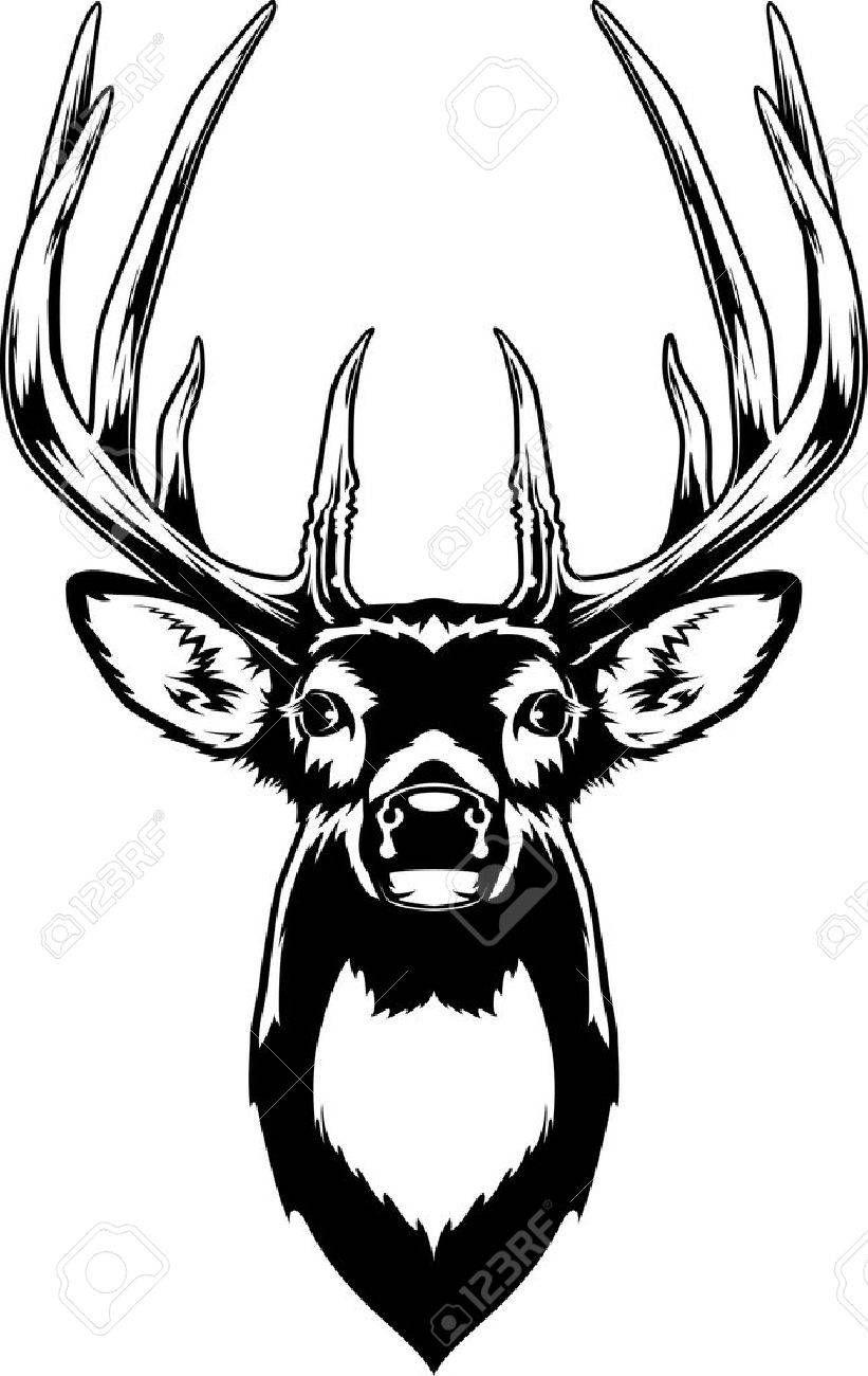 Whitetail Deer Head , AD, Whitetail, Deer, Head Deer