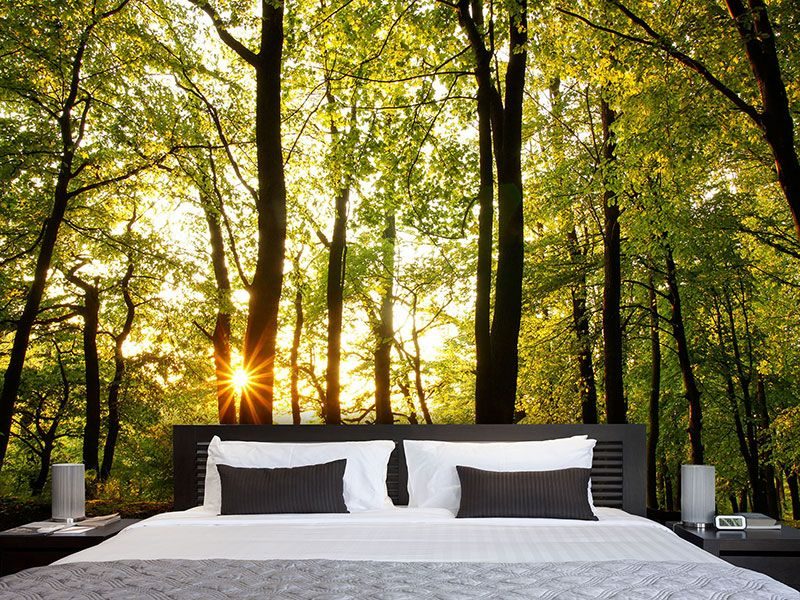 fototapete sonnenuntergang zwischen den b umen living. Black Bedroom Furniture Sets. Home Design Ideas