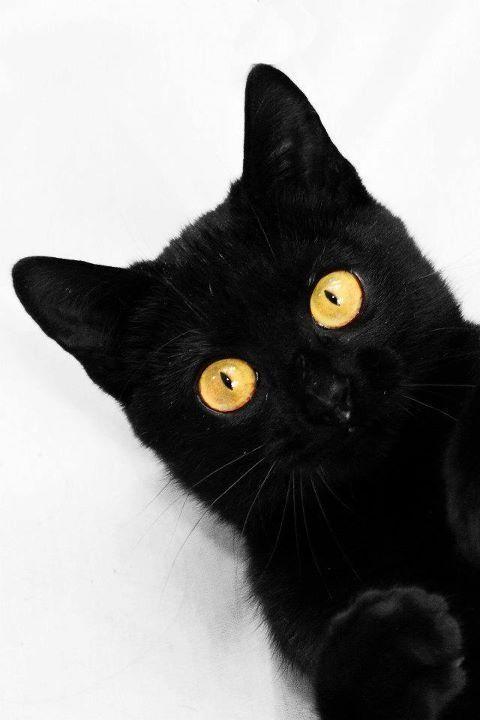 Moment black cat Love Cool cats