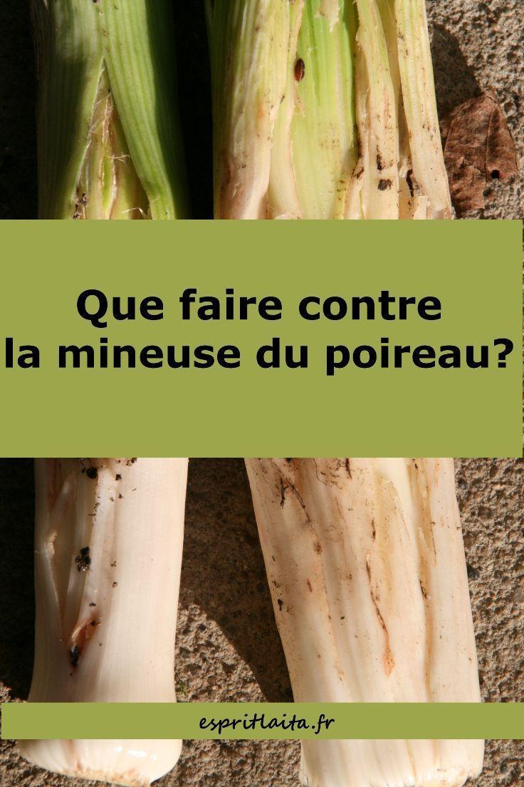 La mineuse du poireau Esprit Laïta Planter des