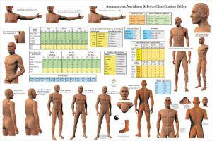 Acupunctuur meridiaan Poster