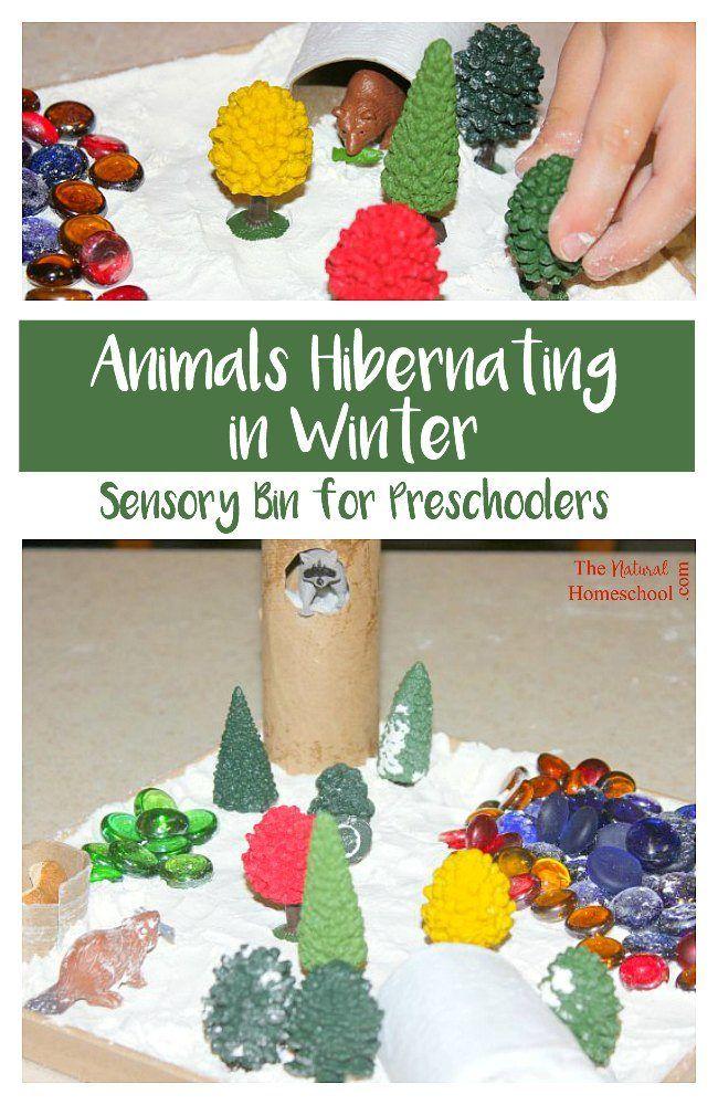 Animals Hibernating in Winter Sensory Bins for
