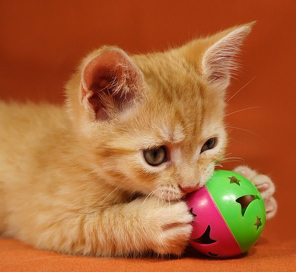 How To Deal With Play Aggression In Ninja Attack Kittens Tabby Cat Kittens Kitten Lover