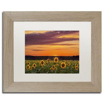 "Trademark Art ""Sunflower Sunset"" by Michael Blanchette Framed Photographic Print Size: 1"