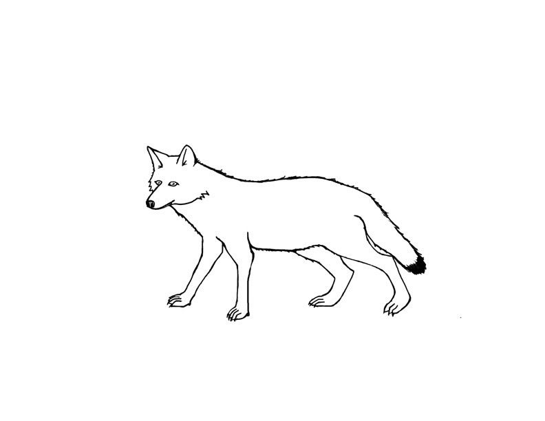 Free Printable Coyote Coloring Pages For Kids | Coloring ...