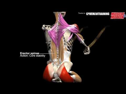 Decline Sit Up Anatomy Kinesiology And Common Mistake Youtube