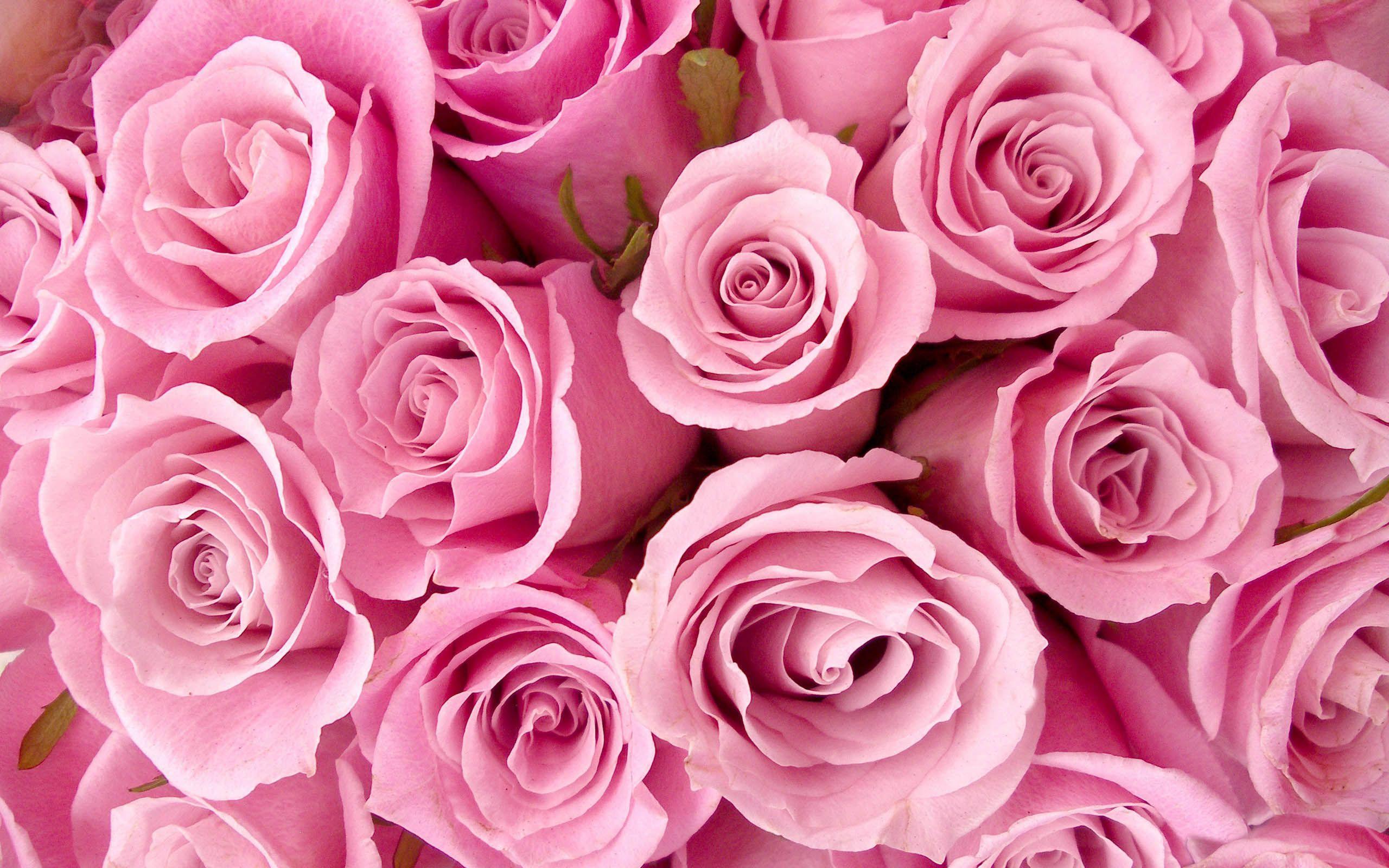 Pink Rose, Flower Wallpapers, Desktop Backgrounds - digital images ...