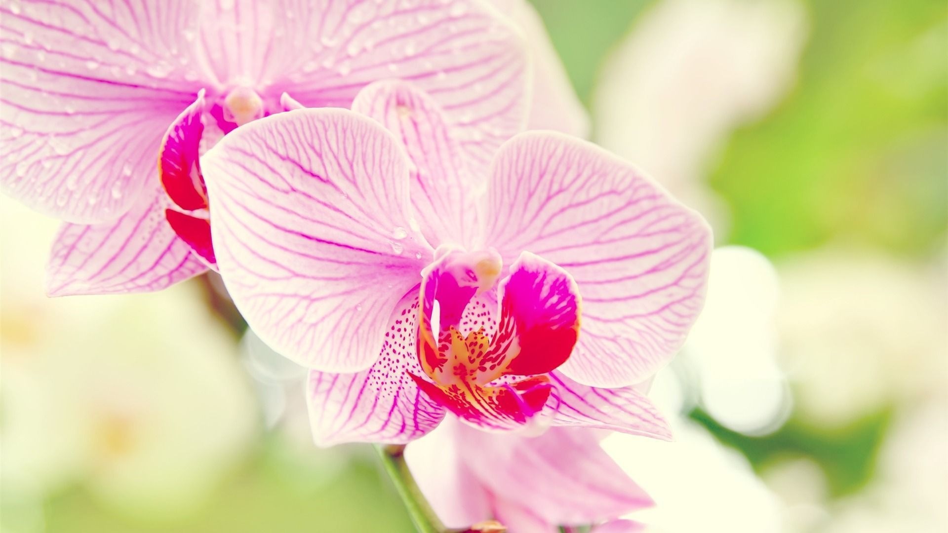Under The Orchid Wallpaper Macro 1920x1080 Wallpaper Download Orchid Flower Pink Orchids Orchid Wallpaper