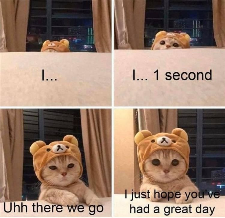 Top 35 Funny Animal Memes Of The Day In 2021 Funny Animal Memes Cat Memes Animals