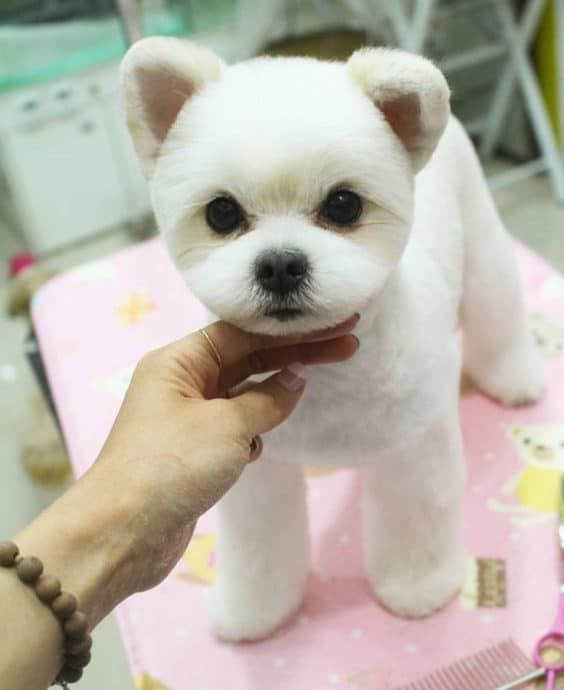 15 Very Interesting And Funny Dog Haircuts This Way Come Teddy Bear Dog Dog Grooming Dog Grooming Styles