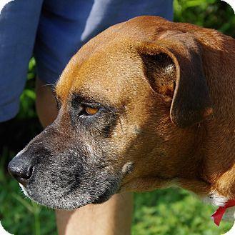 Daytona Beach, FL Boxer Mix. Meet Trina, a dog for