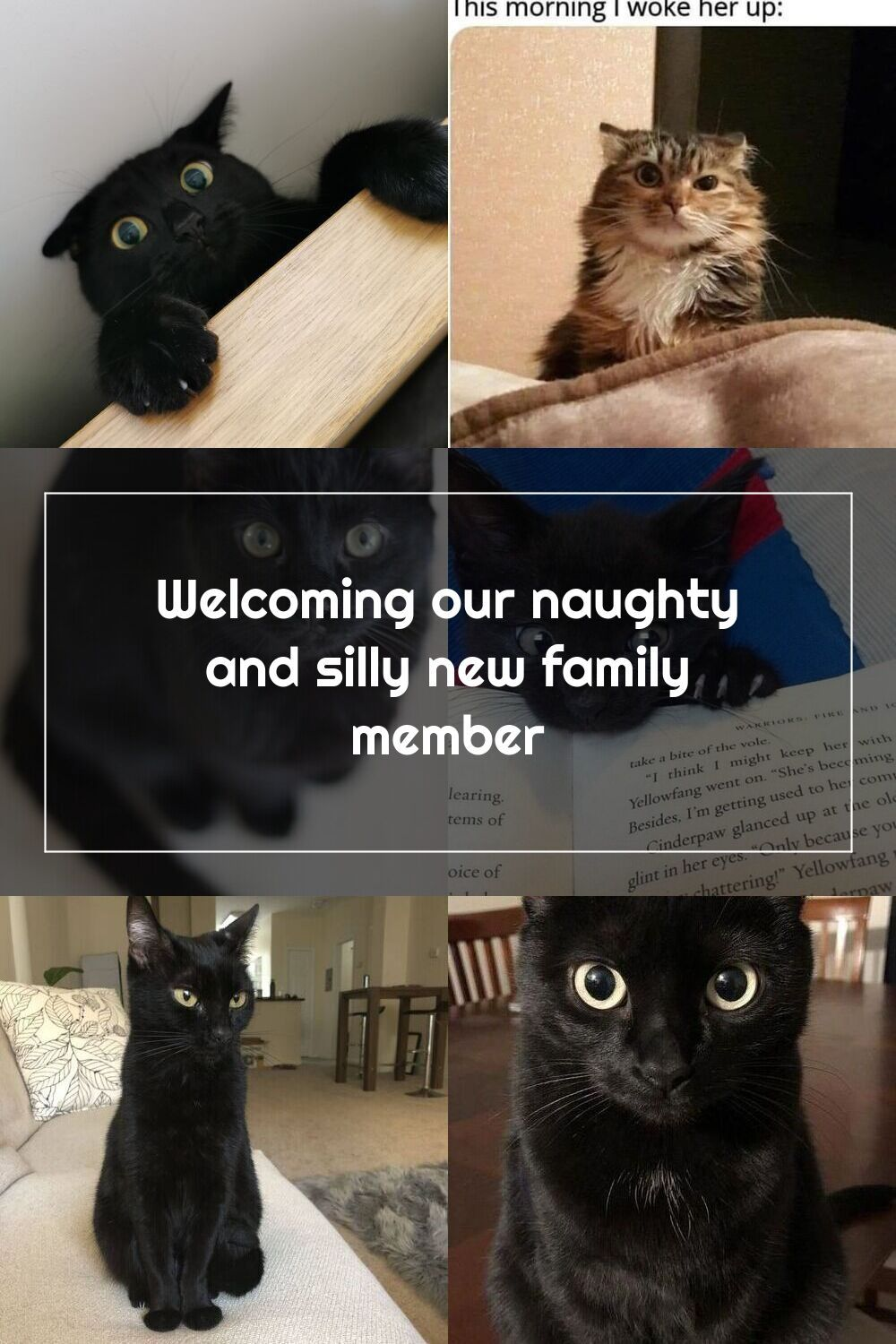 Welcoming Our Naughty And Silly New Family Member Black Kitten Black Ca In 2020 Black Kitten Kitten Silly