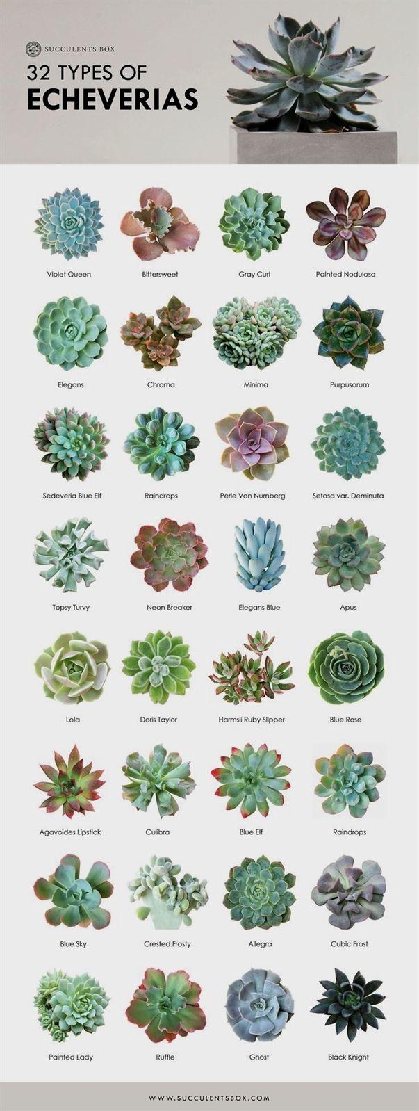 206e1f6a88dcc9a5654d356f31a07330 - Where Can I Buy Gardening Supplies Near Me